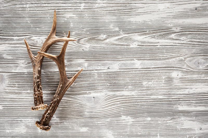 Pair of stag antlers and rustic woodgrain stock photo