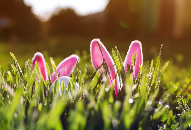 Pair of toy rabbits with ears and a white egg peeking out of the green juicy grass in the spring meadow. Funny Easter scene with a pair of toy rabbits with ears stock photography