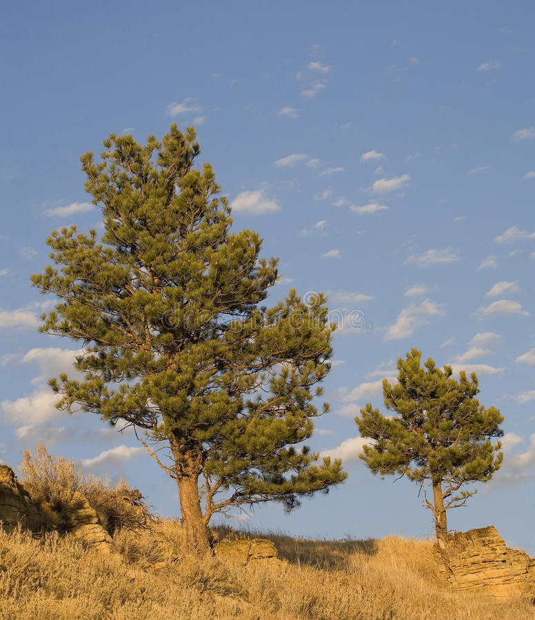 Download Pair of trees stock image. Image of grey, ranch, rocks - 28098365