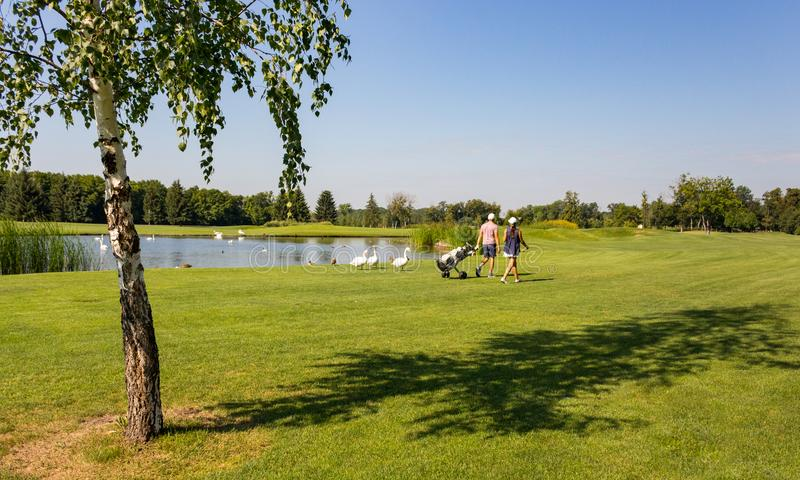 Pair of unknown golfers back view with bag in golf field with swans and ducks near lake. Golfing concept. Summer landscape. Active sport concept royalty free stock photo