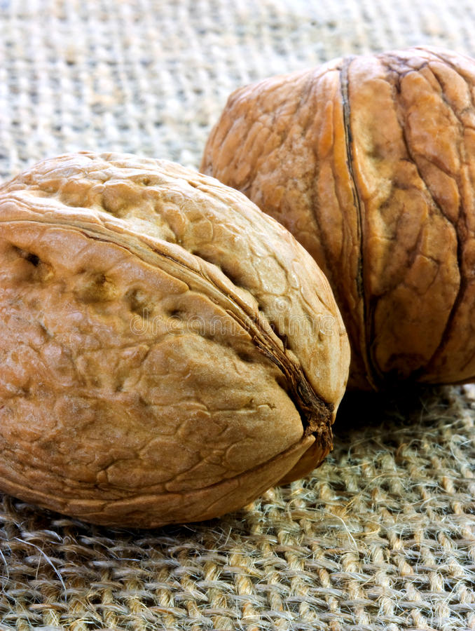 Download Pair of walnuts on jute stock photo. Image of closeup - 28323240