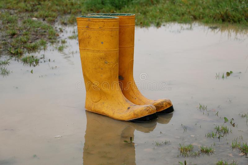 Yellow rubber boots stand in a puddle on a rainy day royalty free stock photo