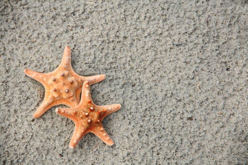 Paires d'étoiles de mer images stock