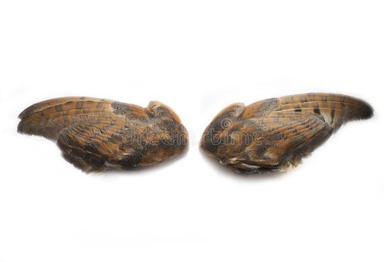 Paires d'ailes de hibou photo libre de droits