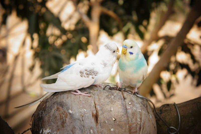 Paires d'oiseaux photographie stock