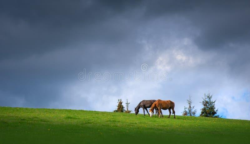 Paires de chevaux frôlant dans les montagnes sur le fond du ciel foncé orageux photos libres de droits