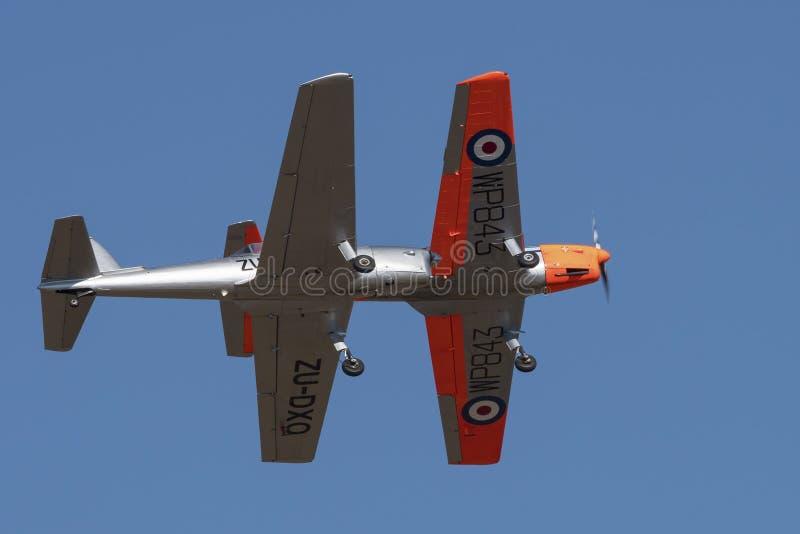 Paires de Havilland Chipminks dans la formation image stock