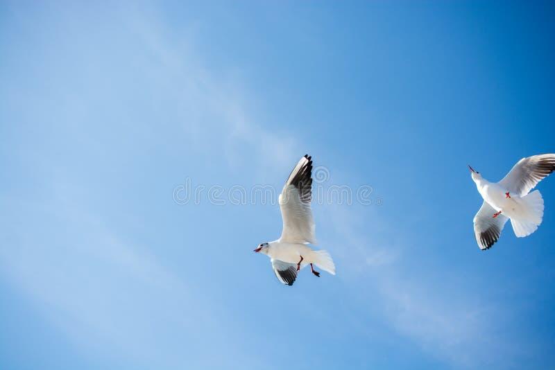 Download Paires De Mouettes Volant En Ciel Au-dessus Des Eaux De Mer Image stock - Image du mouette, paix: 87702105