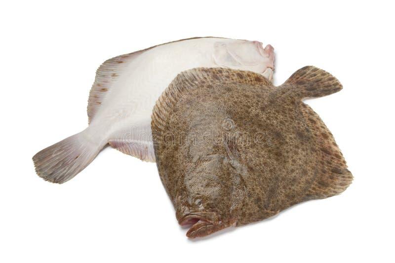 Paires de poissons frais de turbot photos libres de droits