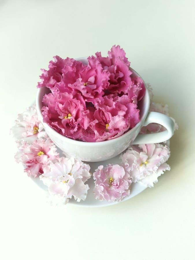 Paires de thé avec les fleurs roses comme la mousse photographie stock