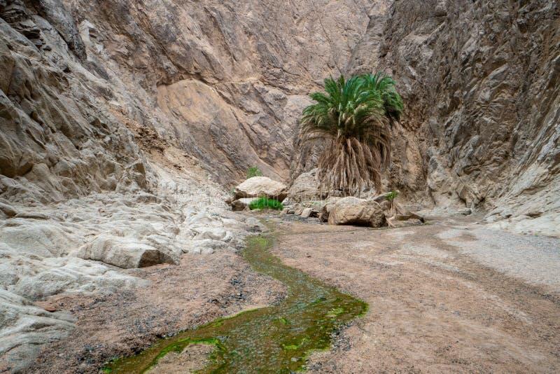 Paisagem áspera com um rio pequeno e uma palmeira em um barranco em Arábia Saudita do norte fotografia de stock