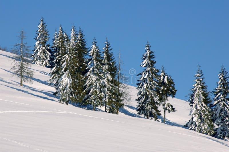 Paisagem 1 do inverno imagens de stock
