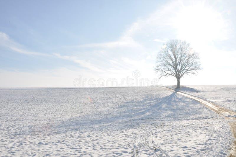 Paisagem 3 do inverno imagens de stock royalty free