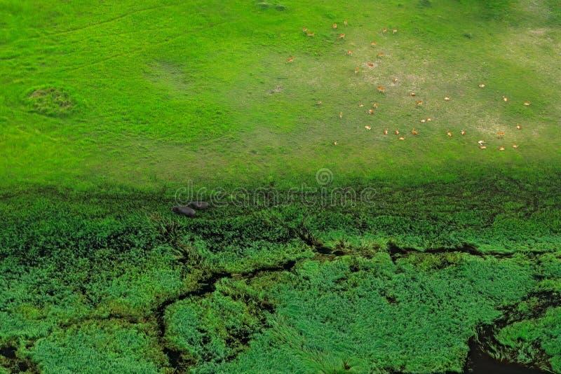 Paisagem aérea no delta de Okavango, Botswana Lagos e rios, vista do avião Vegetação verde em África do Sul Árvores com foto de stock