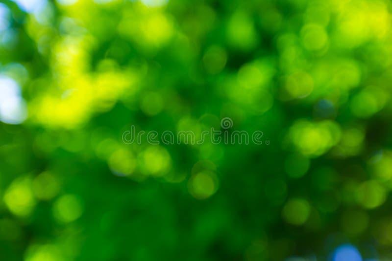 Paisagem abstrata de floresta defocused do verão fotografia de stock