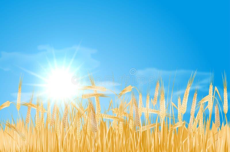 Paisagem abstrata do verão com campo de milho, sol e nuvens ilustração do vetor