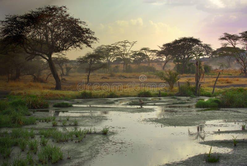 Paisagem africana foto de stock royalty free