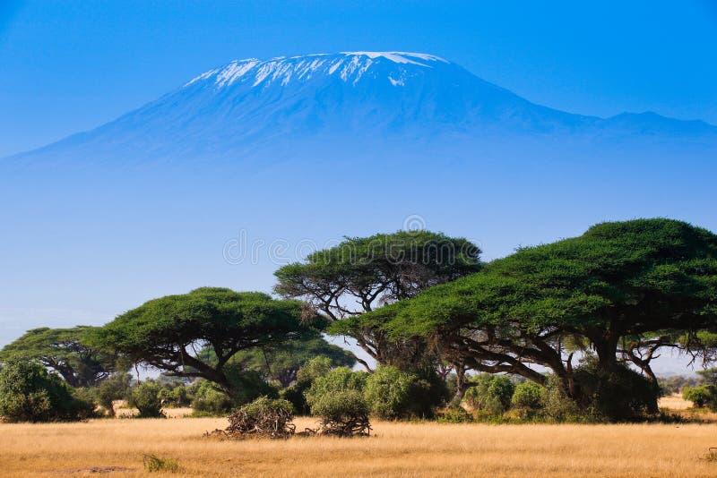 Paisagem africana com elefantes e montanha de Kilimanjaro fotos de stock