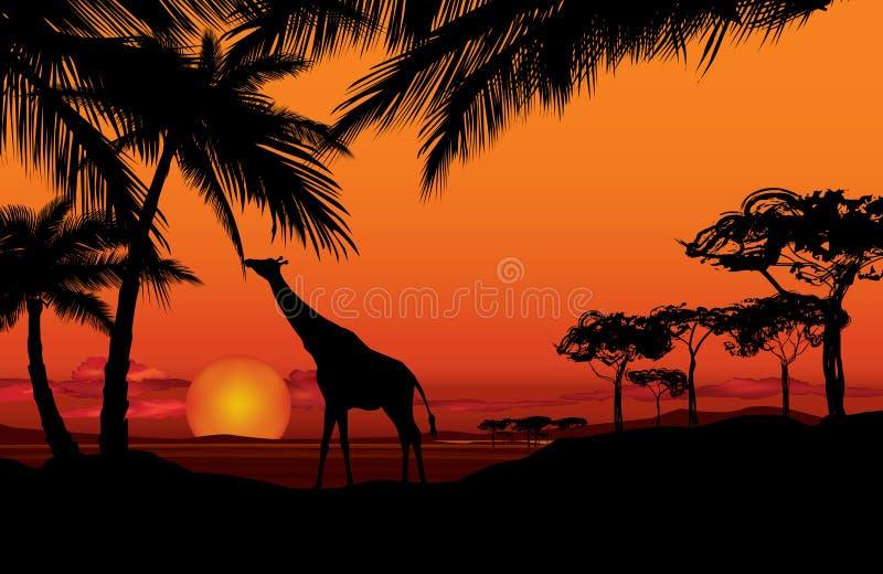 Paisagem africana com silhueta animal Backgro do por do sol do savana ilustração stock