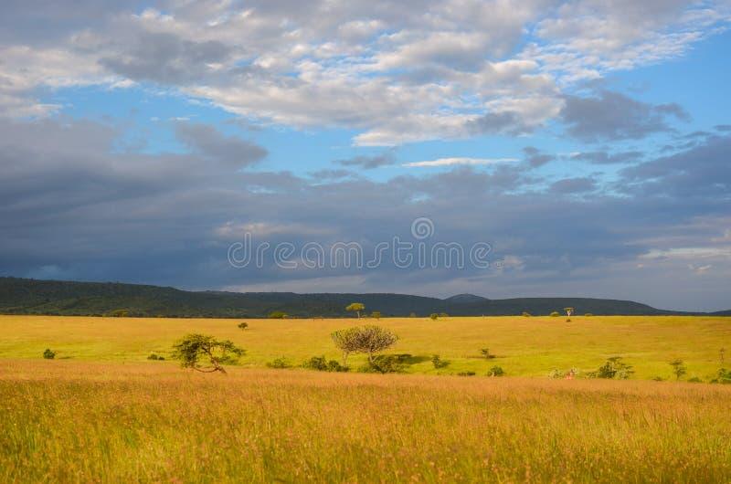 Paisagem africana do savana, Masai Mara, Kenya, África fotografia de stock royalty free