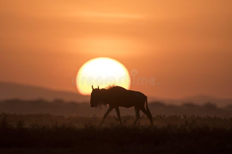 Paisagem africana quando no safari fotografia de stock