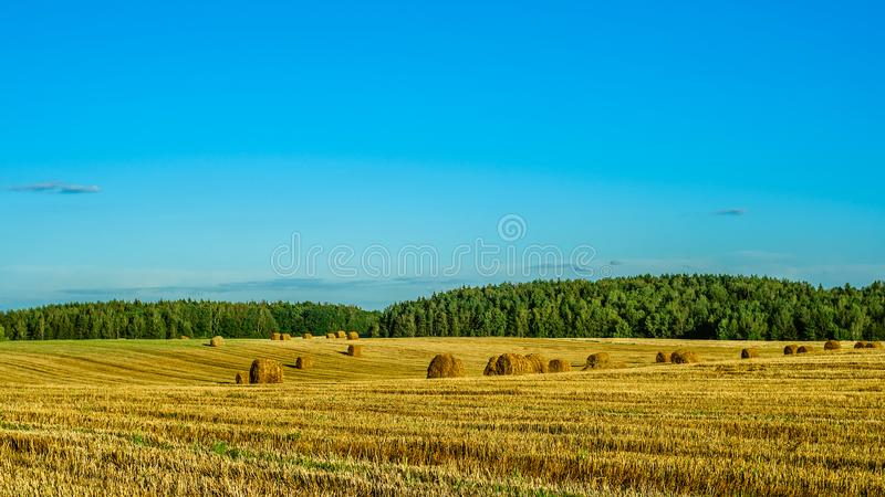 Paisagem agricultural do verão um campo de grão após a colheita com os pacotes da palha seca sob um céu azul claro fotografia de stock royalty free