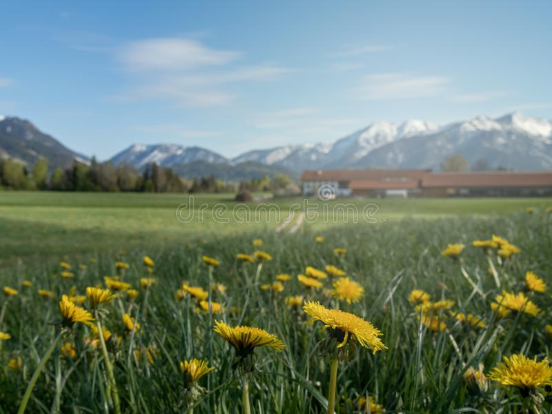 Paisagem alpina bonita com prado e cumes da flor em Baviera imagens de stock