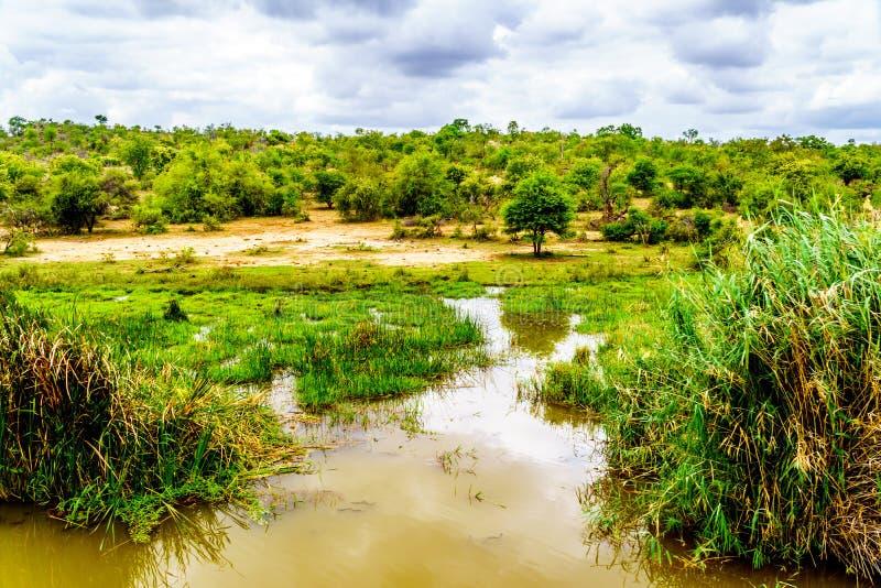 Paisagem ao longo do rio de Olifants perto do parque nacional de Kruger em África do Sul fotos de stock