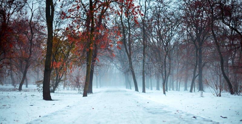 Paisagem assustador e nevoenta do inverno no parque nevado, com trajeto abandonado Atmosfera temperamental, sombrio, maçante, ro imagens de stock