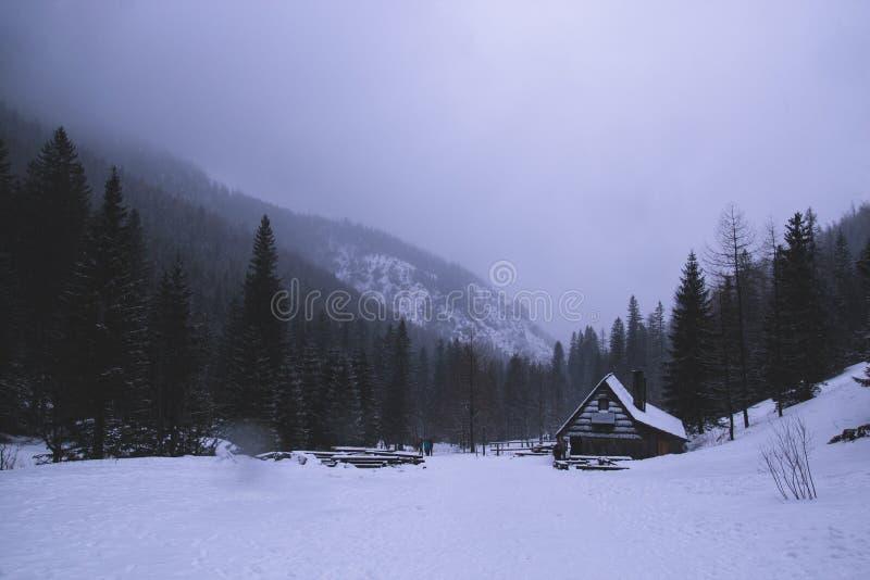 Paisagem assustador sombrio escura do inverno da montanha com o conífero para imagens de stock royalty free