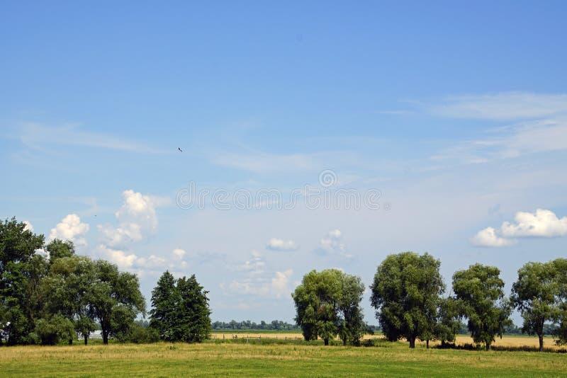 A paisagem bielorrussa Uma cegonha é um bastardo sobre os campos verão - julho imagem de stock