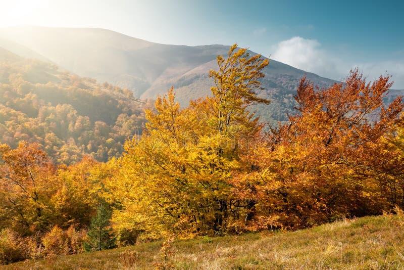 Paisagem bonita com as árvores do outono em montanhas Carpathian, Ucrânia fotografia de stock royalty free