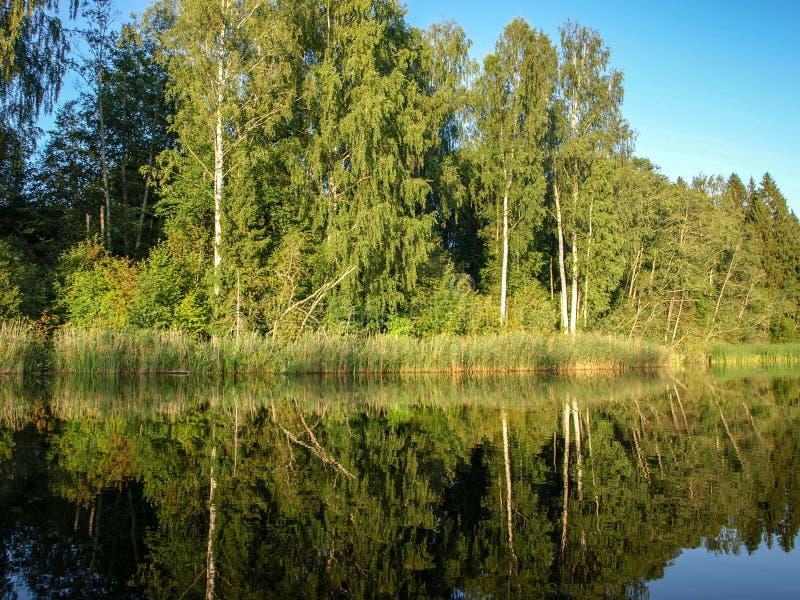 Paisagem bonita com lago calmo, reflexões do verão de árvores diferentes, imagens de stock royalty free