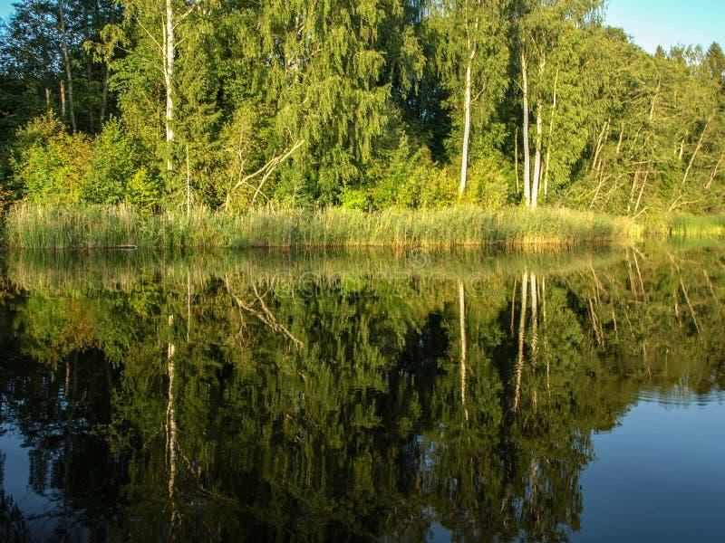 Paisagem bonita com lago calmo, reflexões do verão de árvores diferentes, imagem de stock