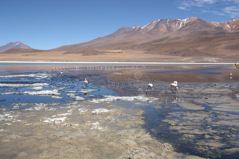 Paisagem bonita com os flamingos na lagoa em Bolívia fotografia de stock
