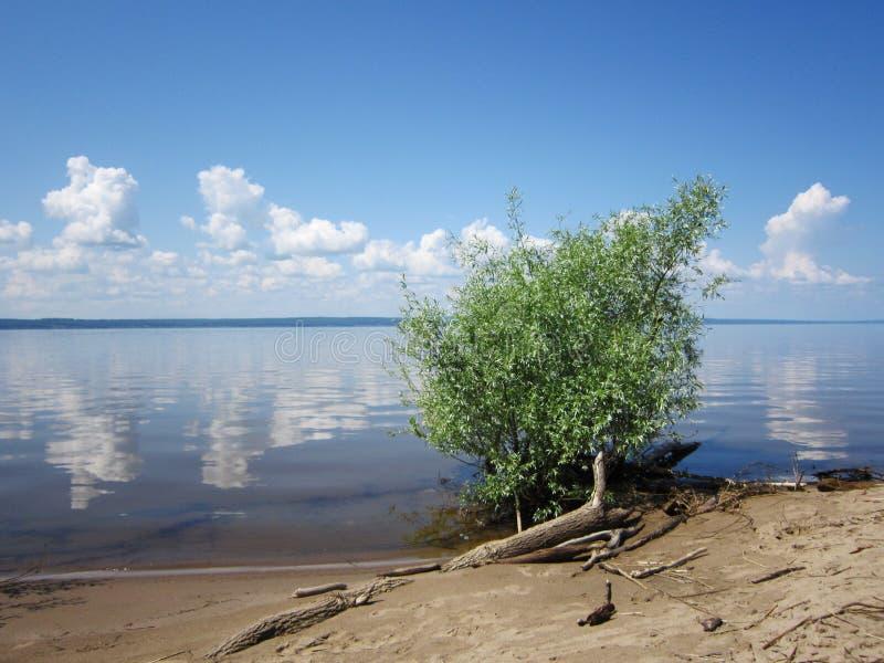 Paisagem bonita com rio, onde as nuvens refletem, e arbusto com folha verde no banco Vista pitoresca no verão fotos de stock royalty free