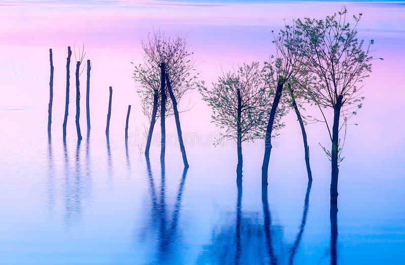 Paisagem bonita com um lago e as montanhas no fundo e as árvores na água Tom azul e roxo da cor fotos de stock