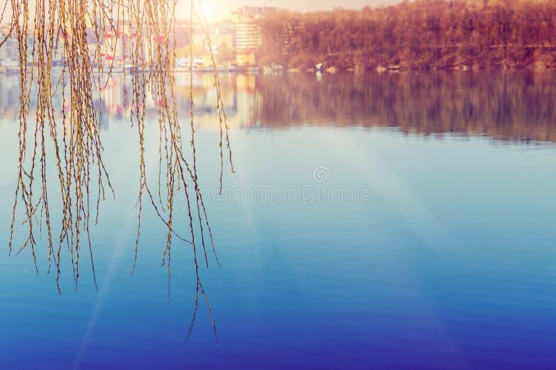 Download Paisagem Bonita Da Mola Rounders Do Salgueiro No Fulgor Do Por Do Sol Sobre O Lago Imagem de Stock - Imagem de alvorecer, folha: 107527613
