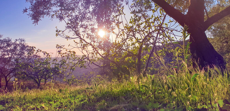 Paisagem bonita da natureza com alargamento do sol fotografia de stock royalty free