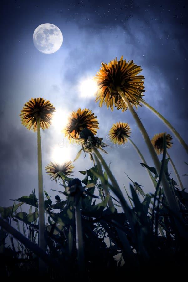 Paisagem bonita da noite do mundo de fantasia ilustração stock