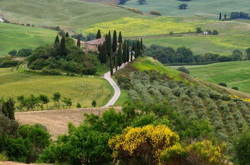 Paisagem bonita de Toscânia em Itália, Belvedere de Podere em Val d Orcia perto de Pienza com cipreste, fotografia de stock