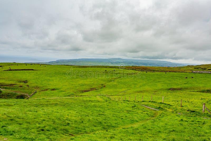 Paisagem bonita do campo irlandês com grama verde foto de stock