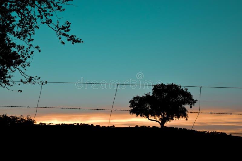Paisagem bonita do campo do por do sol imagens de stock