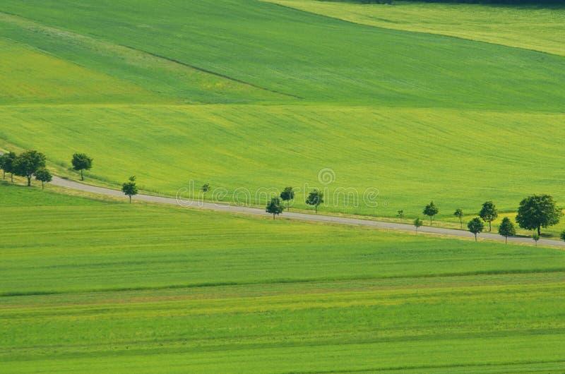Paisagem bonita do campo do verde do verão e árvores verdes e uma estrada rural fotos de stock royalty free