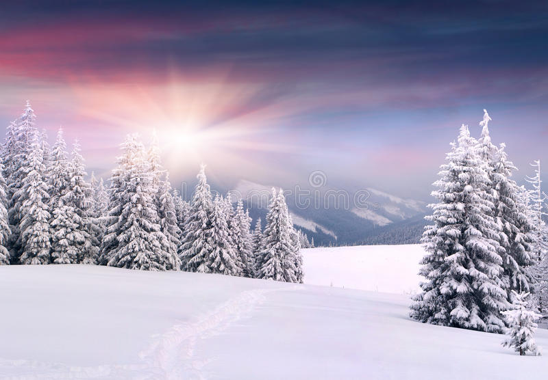 Paisagem bonita do inverno imagens de stock royalty free