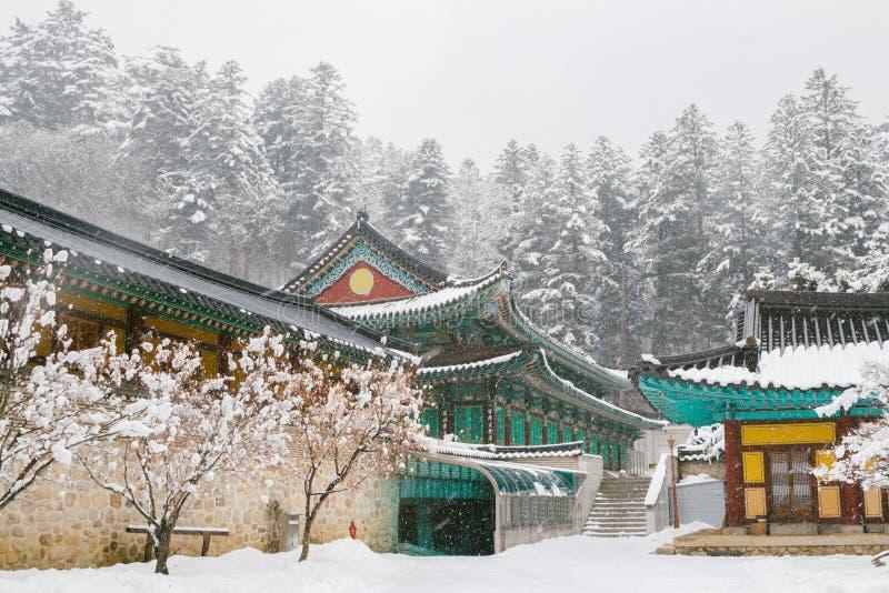 Paisagem bonita do inverno com árvores cobertos de neve e o templo asiático Odaesan Woljeongsa em Coreia foto de stock royalty free