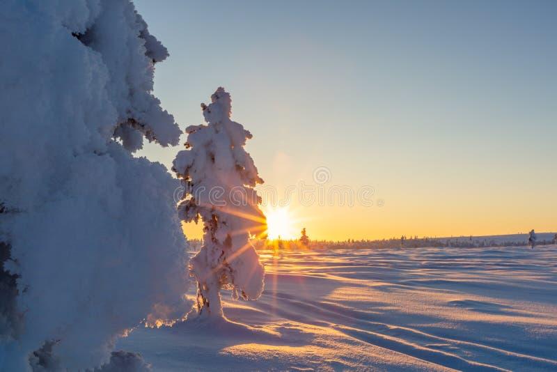Paisagem bonita do inverno com as árvores cobertos de neve em Lapland fotos de stock royalty free