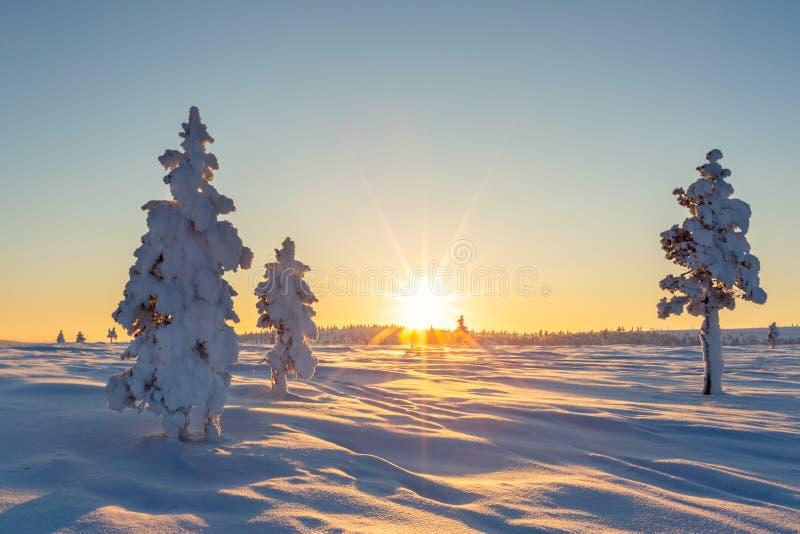 Paisagem bonita do inverno com as árvores cobertos de neve em Lapland imagens de stock