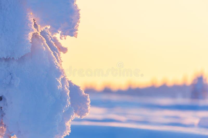 Paisagem bonita do inverno com as árvores cobertos de neve em Lapland foto de stock