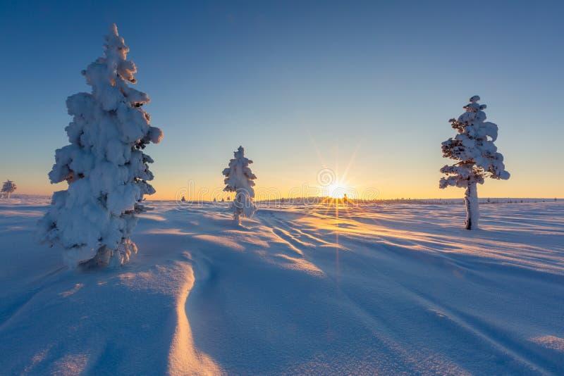 Paisagem bonita do inverno com as árvores cobertos de neve em Lapland imagem de stock